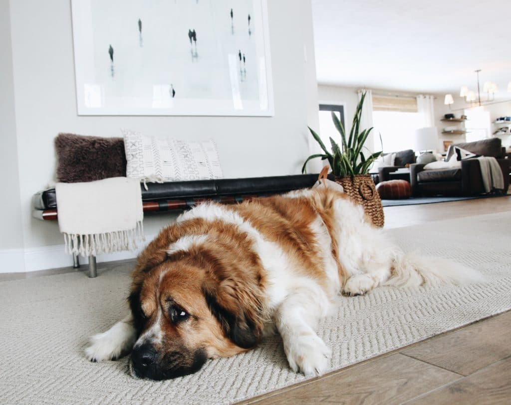 How We Keep Our Home Clean with a Big, Hairy Dog | Chris Loves Julia